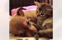 保護されてきた子猫と子犬