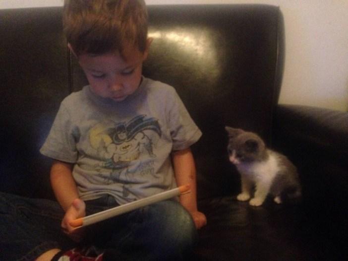 男の子と一緒の子猫
