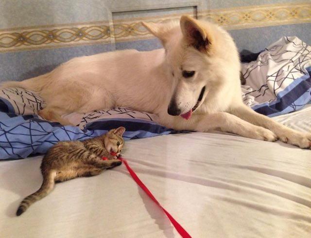 楽しそうな子猫と犬