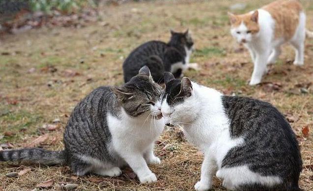 別の猫が近づいてきて