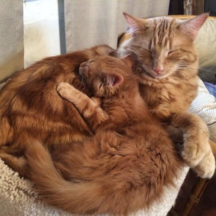 いっしょに昼寝する猫