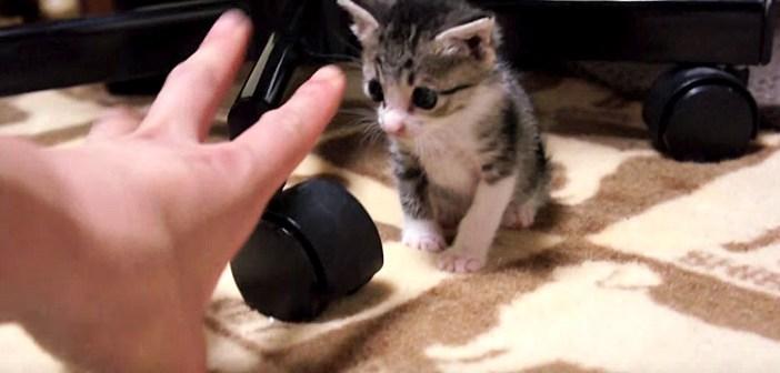 手に反応しない子猫