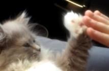 飼い主さんと手遊びする猫