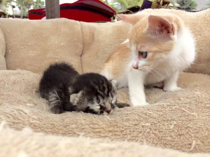 猫と一緒の子猫