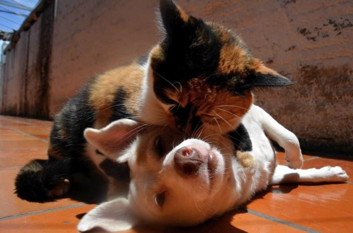 ラブラブな犬と猫