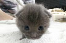 ゴミ箱から助けられた子猫