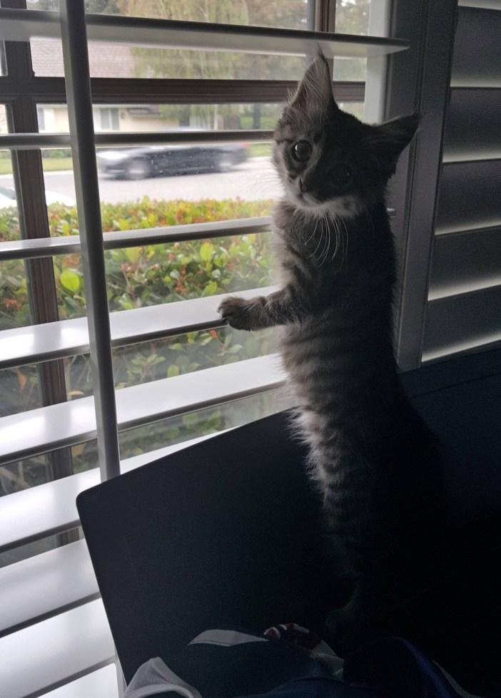 外の様子を見る子猫