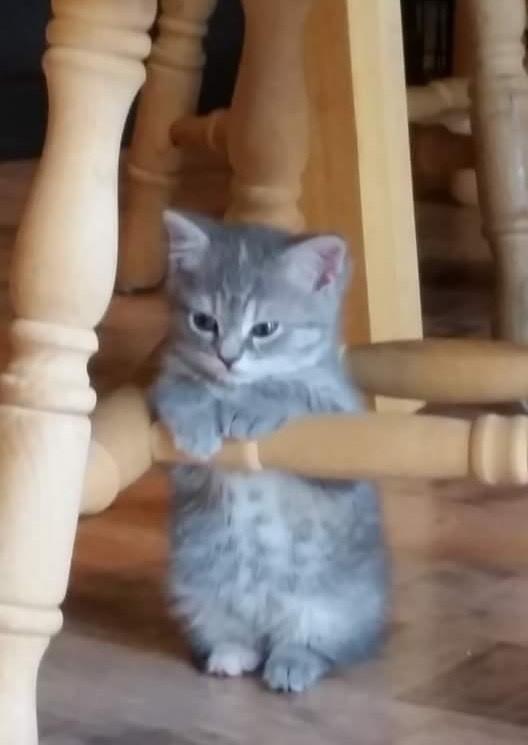 イスの足につかまる子猫