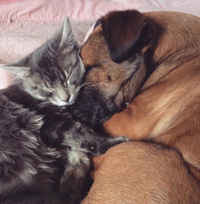 犬を守る猫