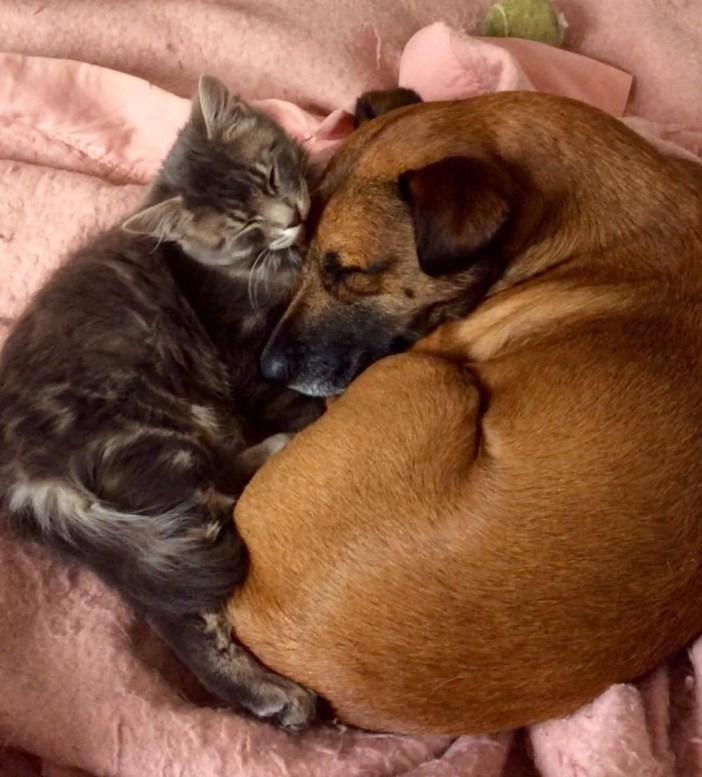 抱きしめある犬と猫