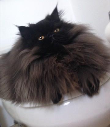ハマってる猫