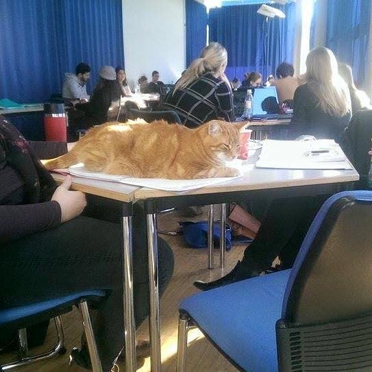 講義に参加する猫