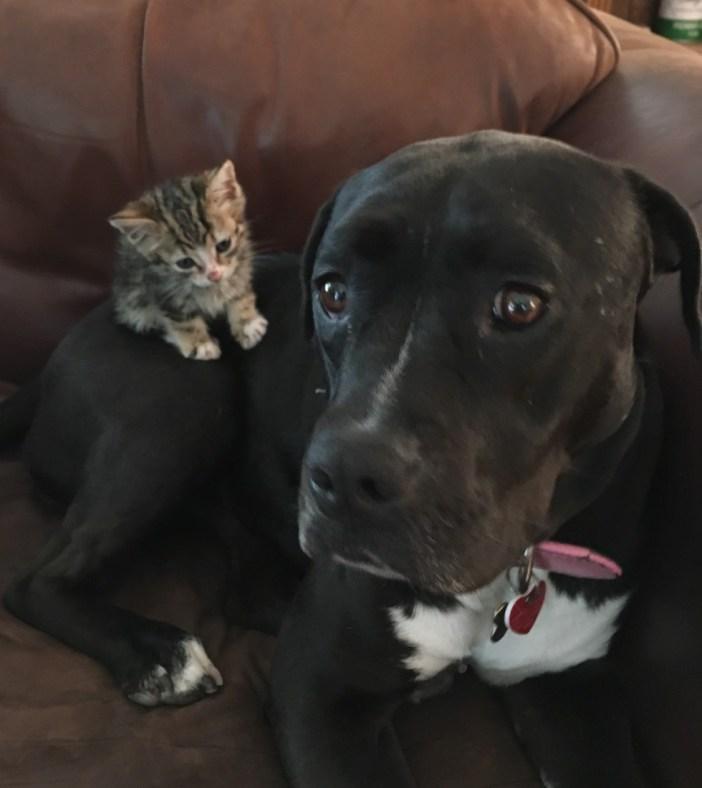 いっしょの犬と子猫