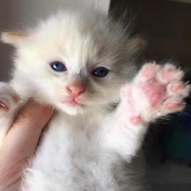 フワフワになった子猫