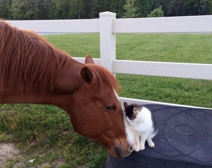 仲良しね猫と馬