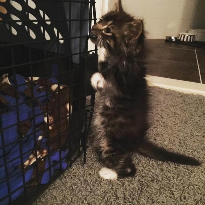 立ち上げる子猫