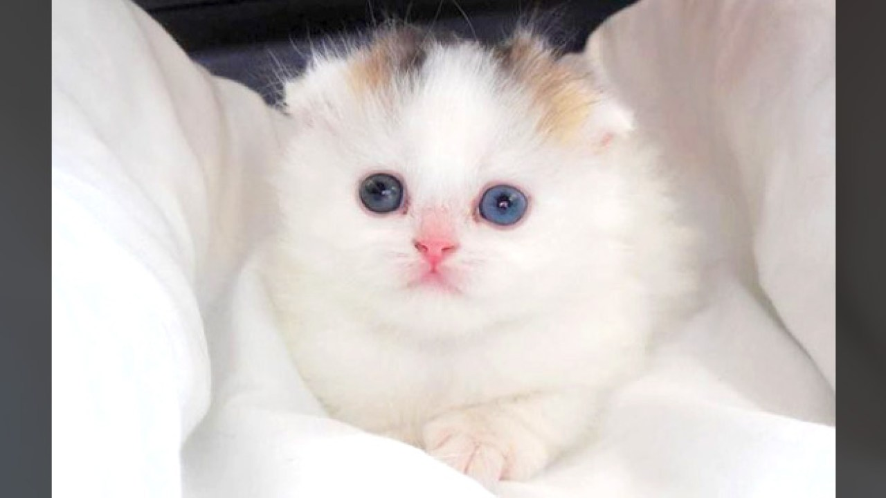 オス 三 毛 猫