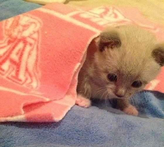 タオルから出てくる子猫