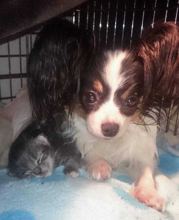 母犬に寄り添う子猫