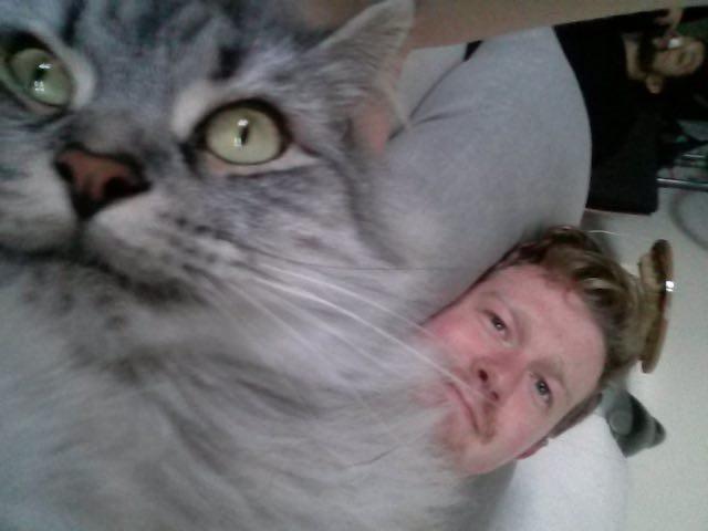 面白い表情の猫