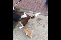 犬の散歩についてくる子猫