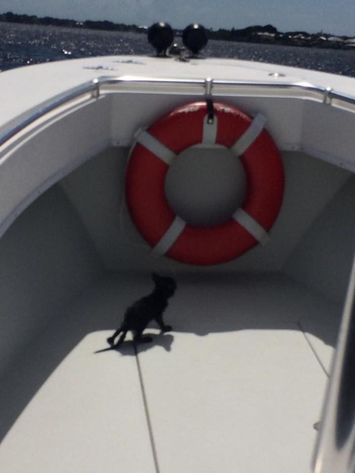 船で見つかった子猫