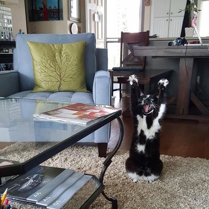 絨毯の上でバンザイする猫