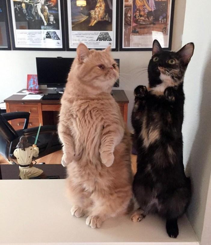 兄弟が気になる猫