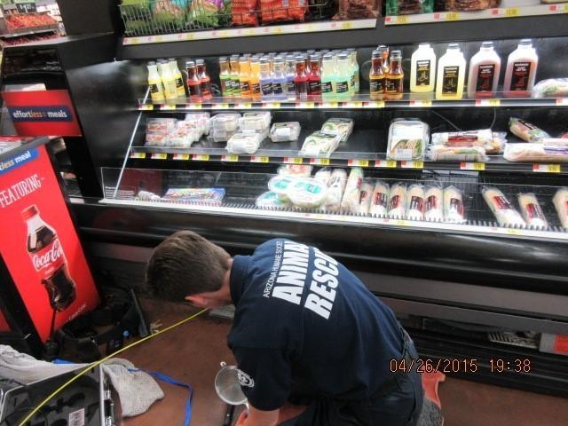 スーパーの冷蔵ケースの下から子猫の声が聞こえてきた