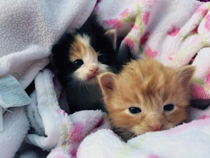 2匹の子猫