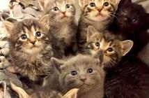7匹の子猫達