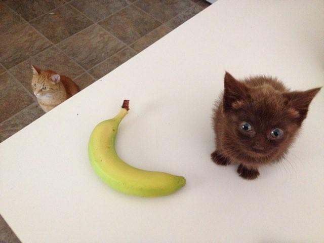 バナナと子猫と先住猫