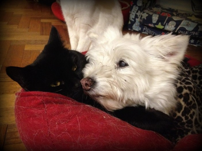 とっても仲良しな猫と犬