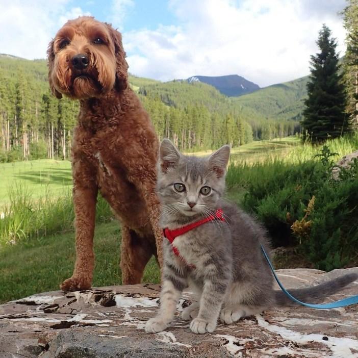 こちらを見る犬と子猫