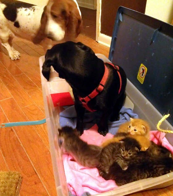 子猫と一緒の犬