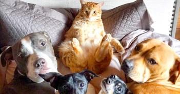 犬と友達の猫