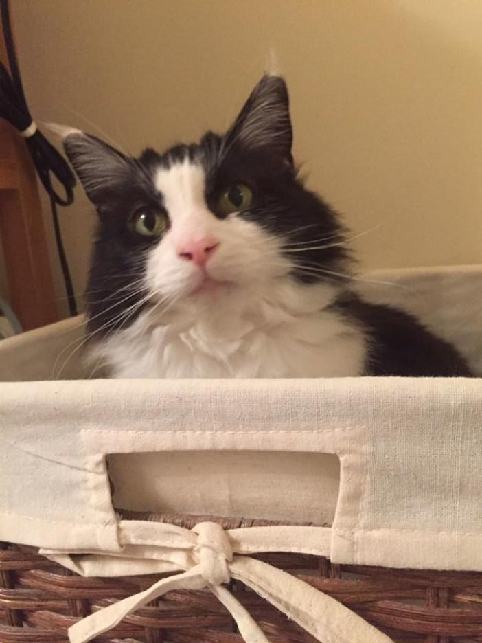 こちらを見る猫