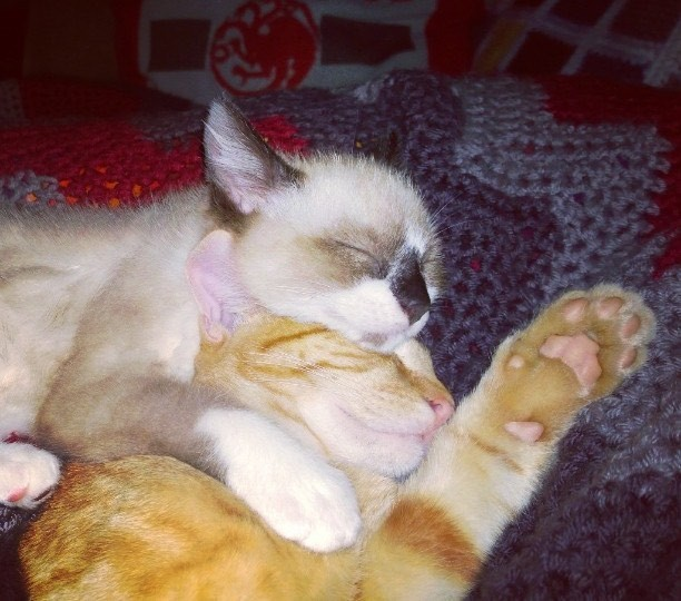 同居猫と友達になった子猫