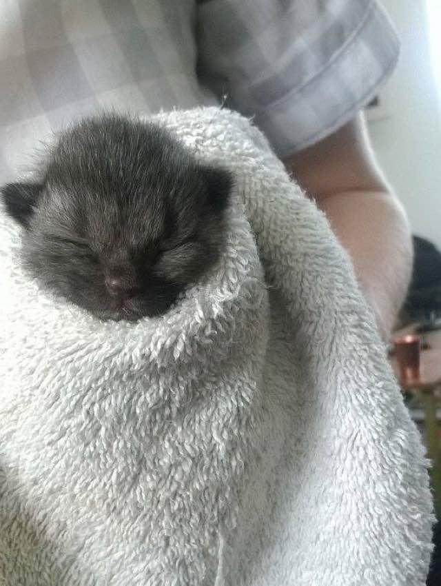 タオルにくるまる子猫