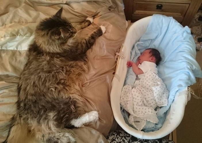 赤ちゃんと大きな猫