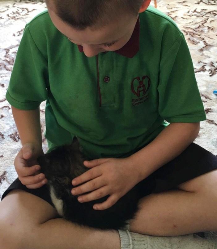 男の子にナデナデされる子猫