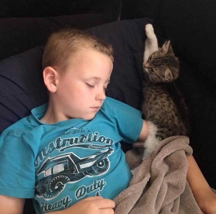 男の子を見守る子猫
