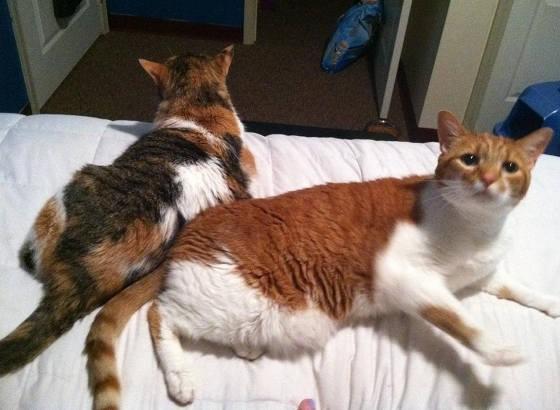 仲良しな兄弟猫