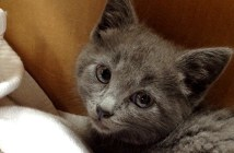 車道から保護された子猫