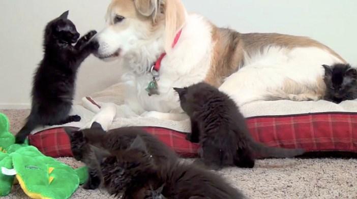 ちょっかいを出す子猫
