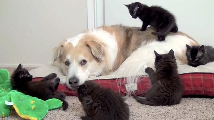子猫と戯れる犬
