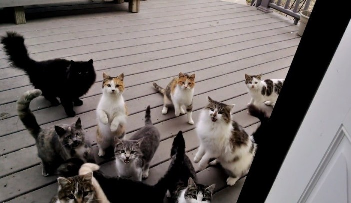 ドアの外の猫