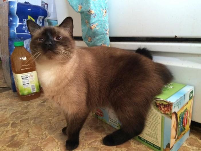 大きくなった子猫
