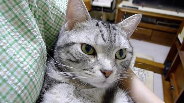 疑問顔の猫