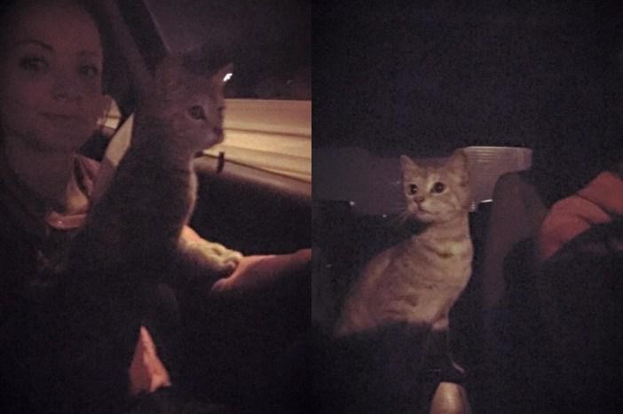 車に乗る猫
